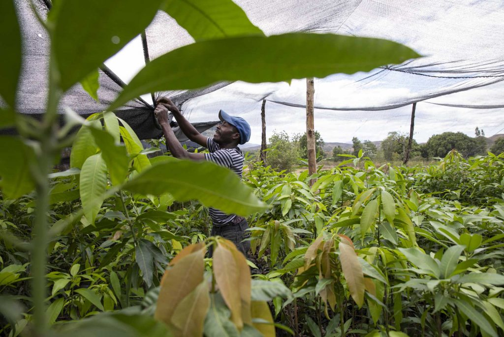 CORE invests in Acceso Haiti to further their joint work of creating economic opportunity and improving the lives of Haitian smallholder farmers