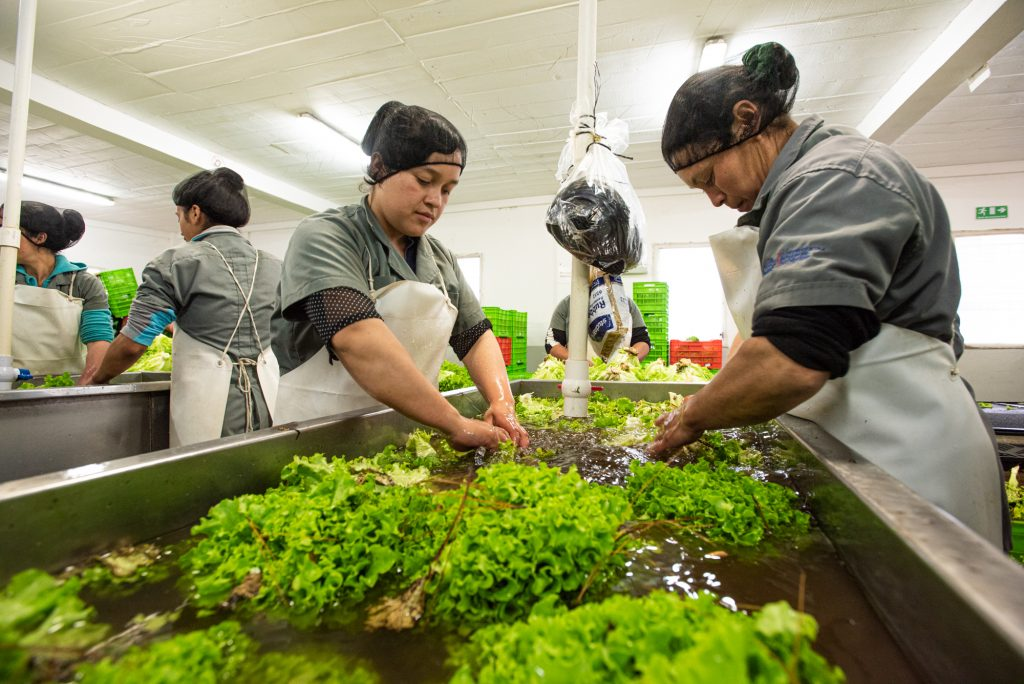 Agrilinks – How Acceso and Feed the Future Partnering for Innovation are Transforming El Salvador's Agricultural Sector
